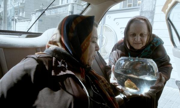 Taxi_Goldfish